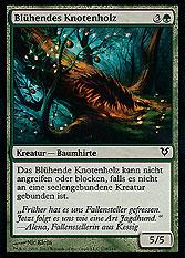 Blühendes Knotenholz